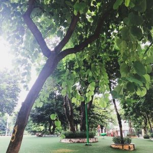 trees in nghia do park